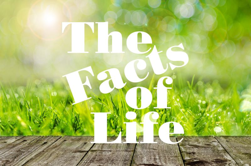 Fortune Cookie Friday: The Facts of Life