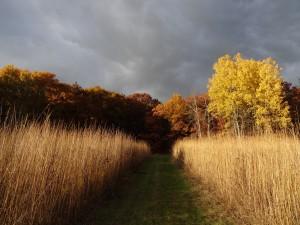 CC15 Prairie Golden Autumn Samhain13