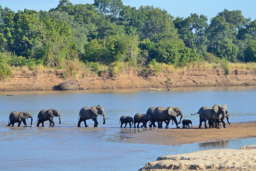 Zambia Luxury Safari - Elephant - Luangwa