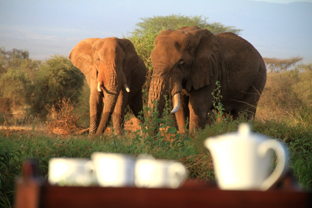 Elephants at Tawi Lodge Kenya