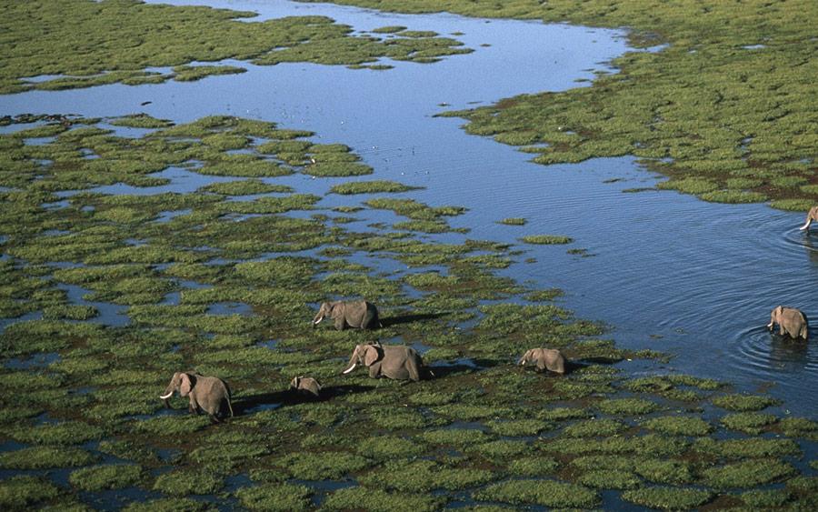 Kenya Safari - Amboseli - Elephants