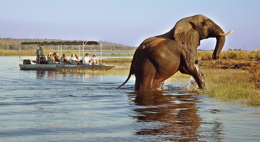 Botswana! Boat Cruise in Chobe Park on a Botswana Luxury Safari