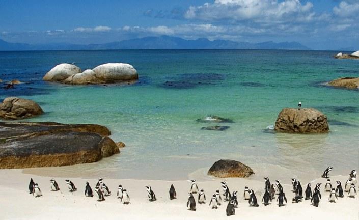 South Africa Safari Penguins