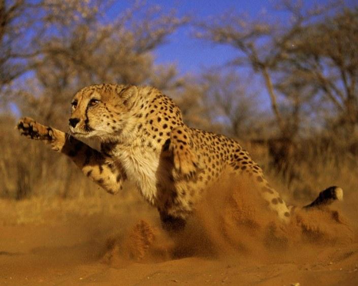 Tailor Made Safari - Get close up to a Cheetah