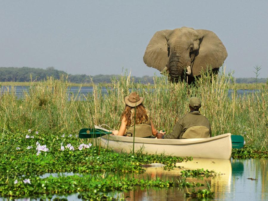 Zambia Luxury Safari - Elephant Low Zambezi