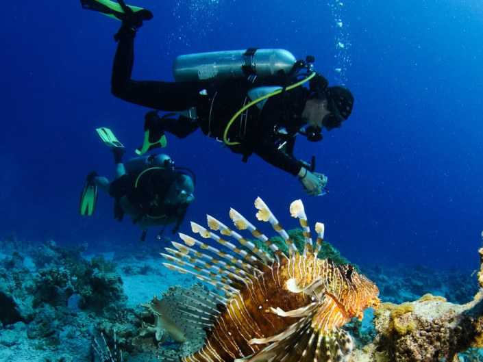 Diving is top of the range in Mozambique