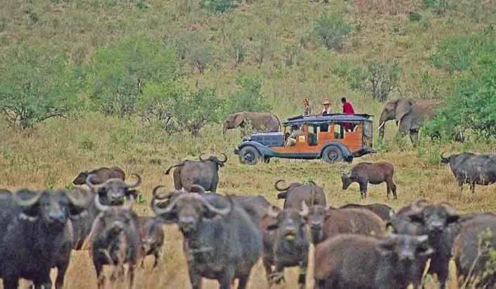 Safari - Game Drive - Elephants and Buffalo - Old Style - Private