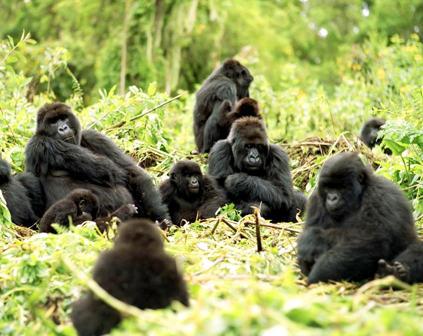 Rwanda Luxury Safari - Gorilla Tracking - Park