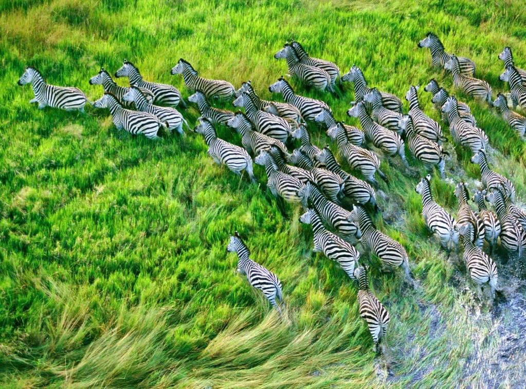 Fly In Safari Botswana