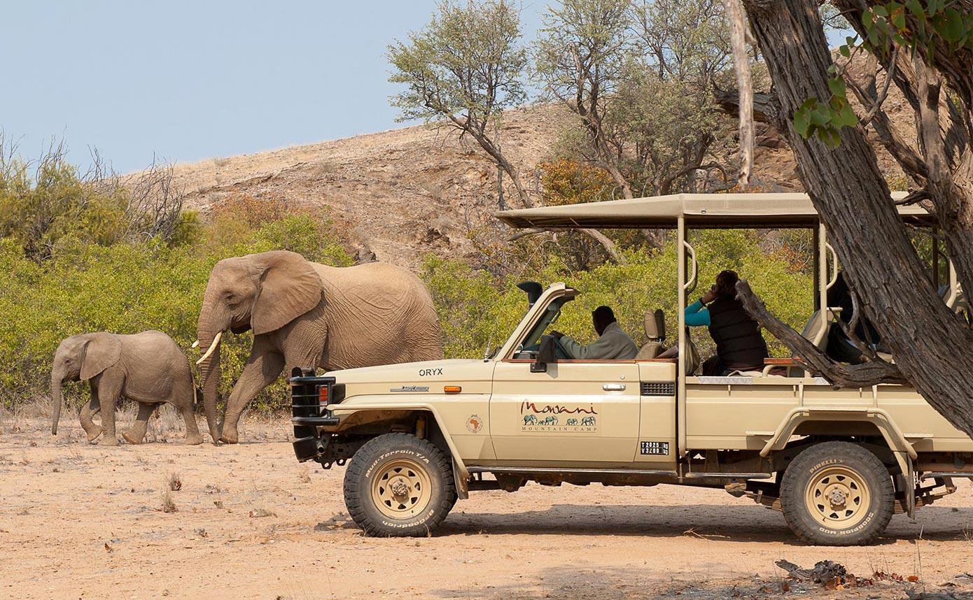Damaraland Desert Elephant Namibia Mowani