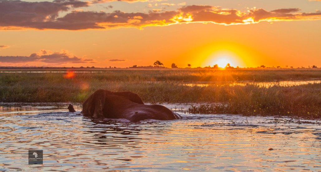 Chobe River Sunset with Elephant