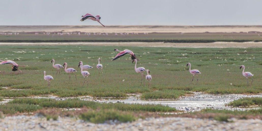 Pelican Point Lodge - Namibia - Walvis bay - peninsula - Flamingos