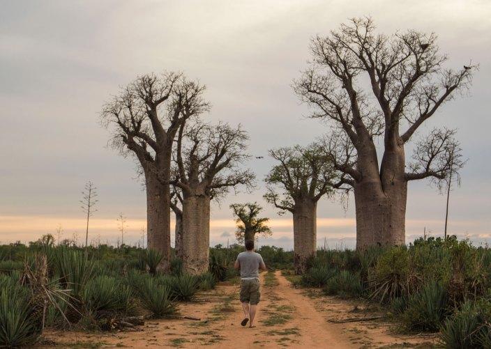 Madagascar Baobabs Mandrare