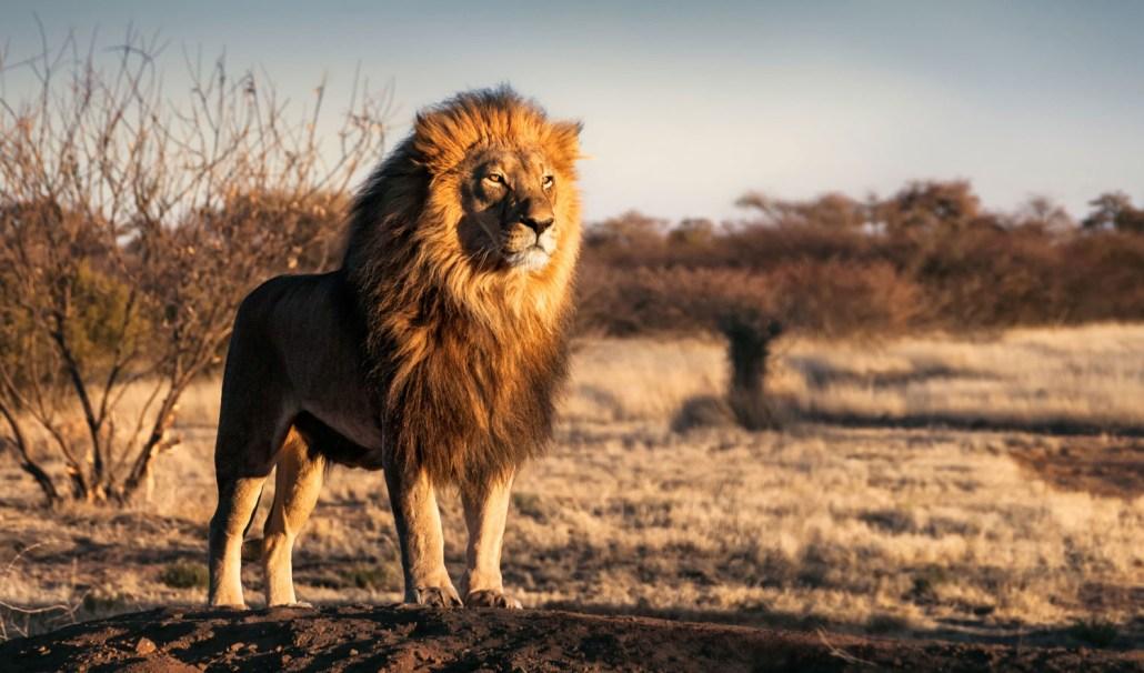 Namibia Luxury Safari