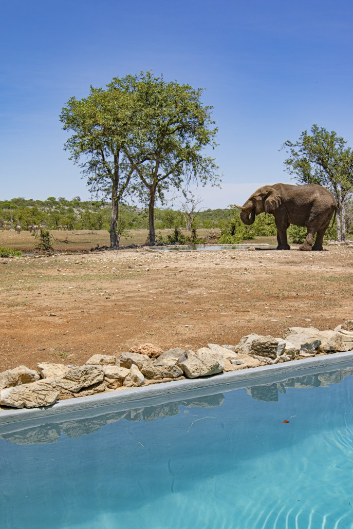 Ongava Tented Camp - Elephant by the Pool