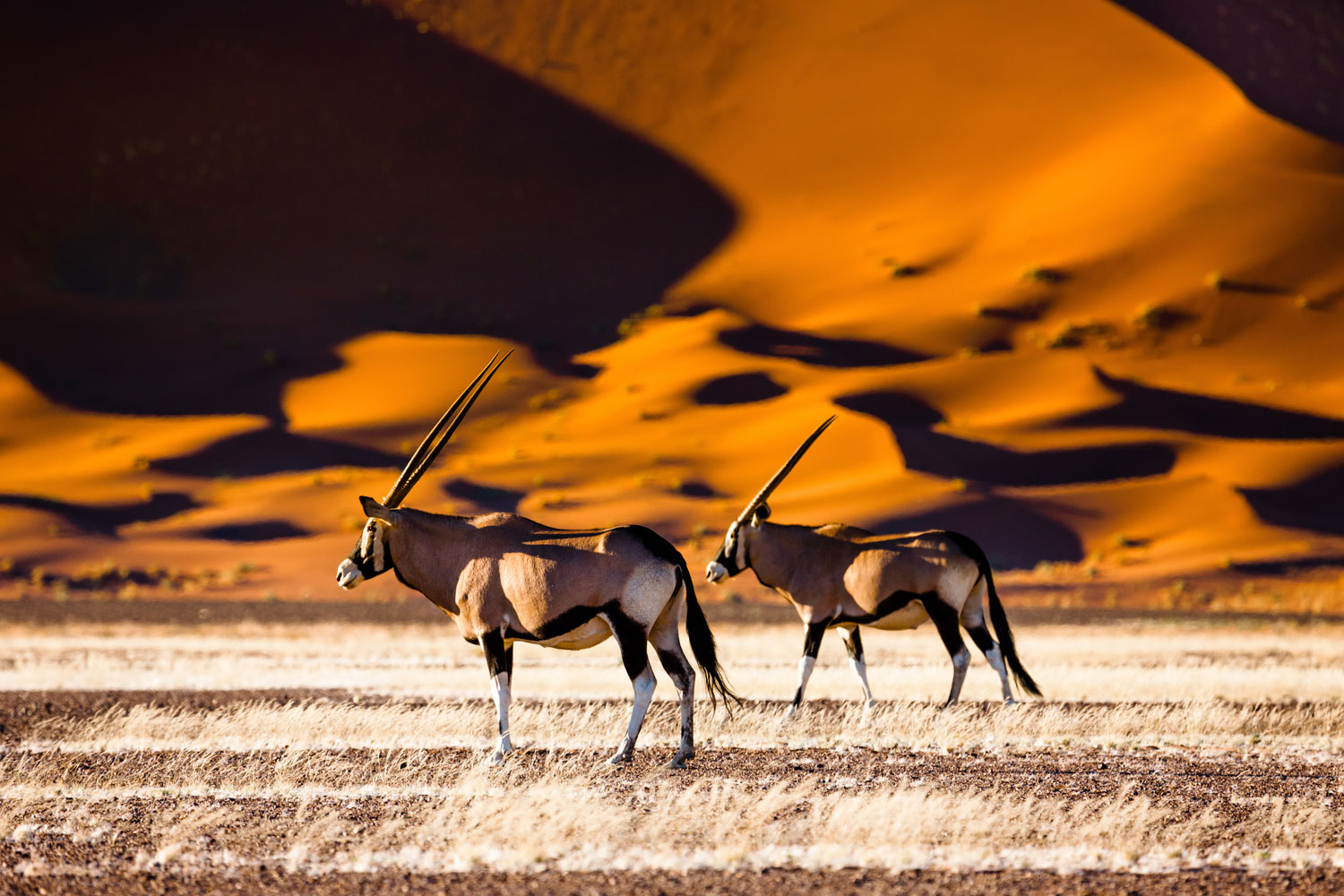 Namibia Luxury Safari Oryx and dunes - Sossusvlei - Namibia - Safari - Namibia