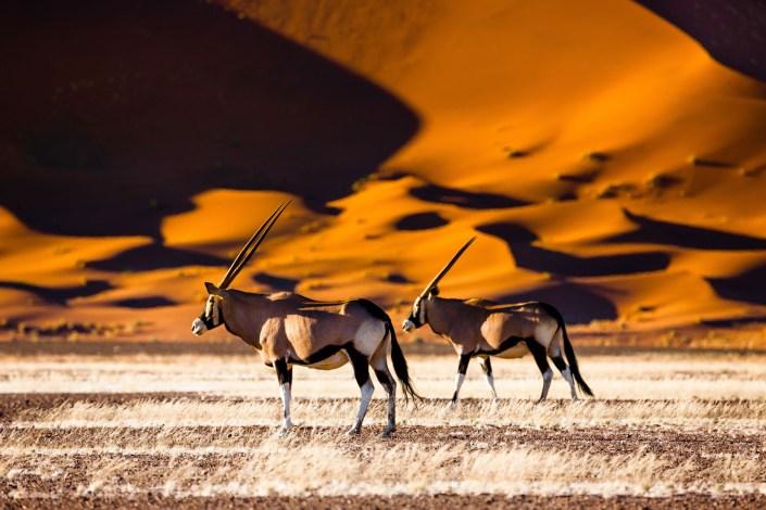 Namibia Luxury Safari Oryx and dunes - Sossusvlei - Namibia - Safari - Namibia
