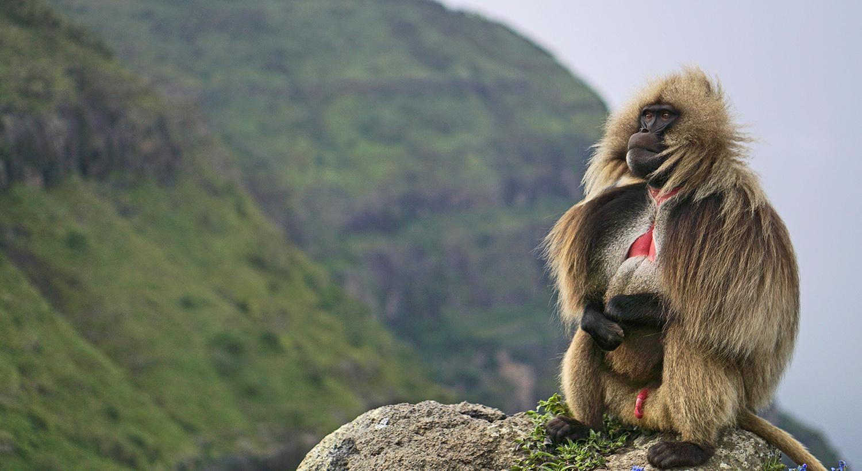 Ethiopia Luxury Safari, Atelier, Africa, AtelierAfrica, Wildlife