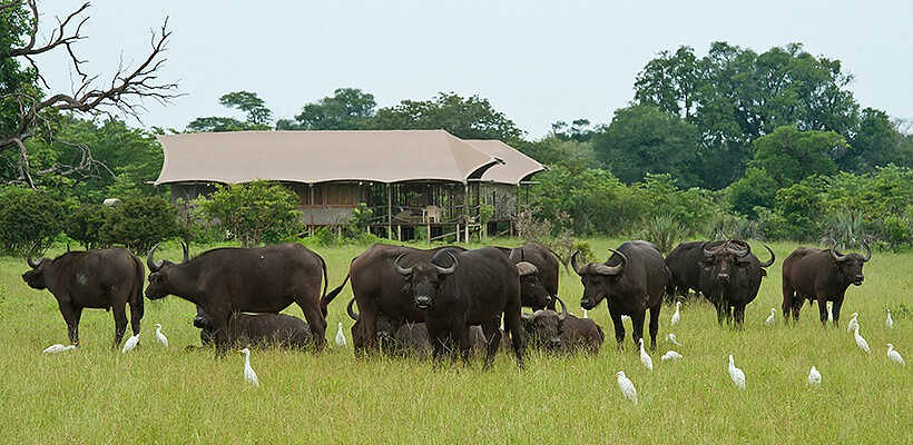 Atelier Africa, Safaris, Malawi, Fish, Animals, Culture, Luxury Safari, Malawi Lake