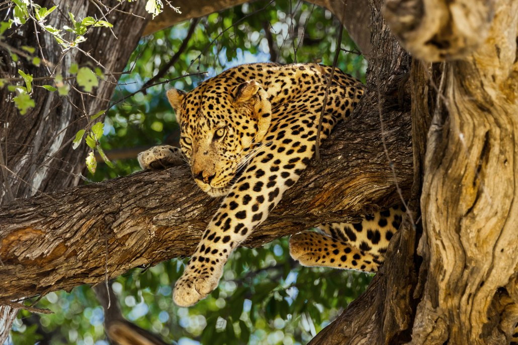 Travel Botswana Safari Chobe Park