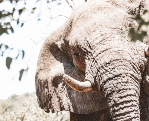 Elephant Etosha Safaris