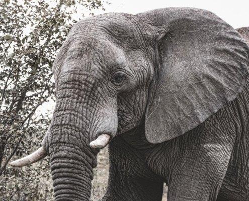 Namibia Elephant Ongava