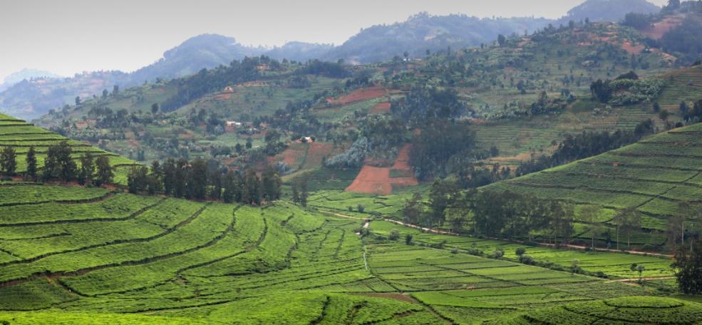 Fields in Rwanda