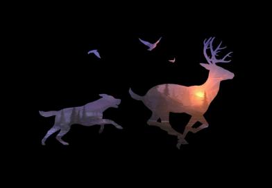 Deer Hunter 2017 : c'est Deer Hunter, mais en mieux !