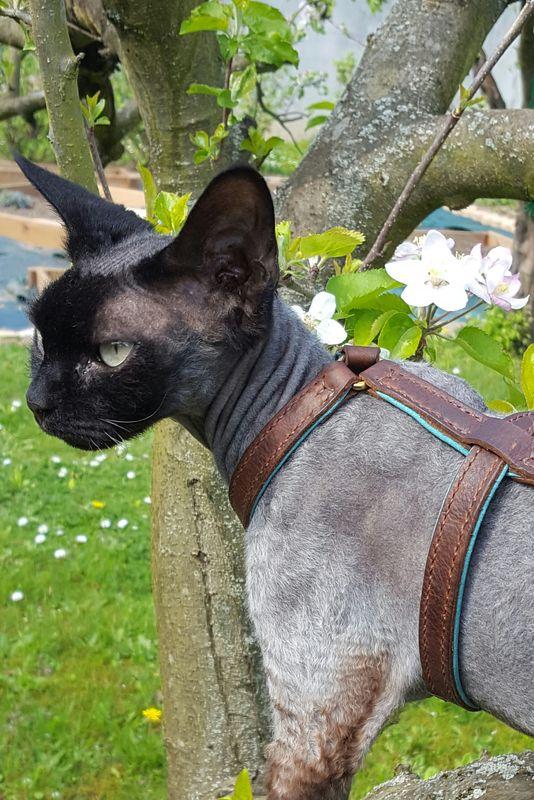 Harnais chat cuir Jungle  cousu main sur mesure  Atelier Napolon