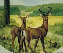 Wildtiere Wandmalerei