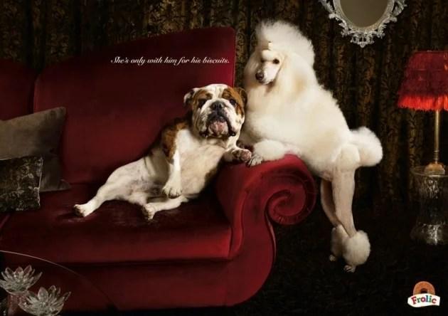 Canapé pour chien dans hôtel haut de gamme pour des vacances de luxe pour animaux