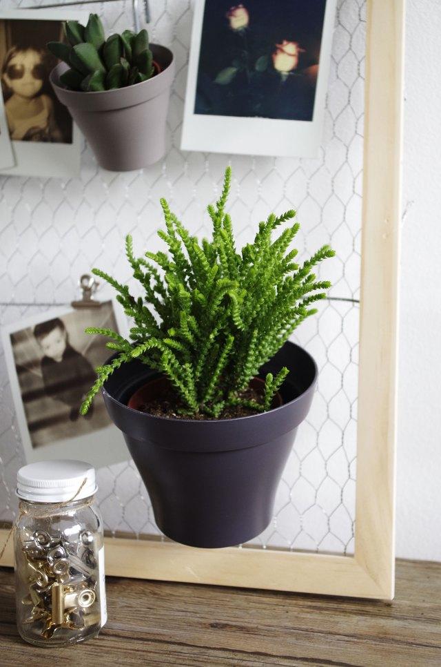 DIY-Mon-pêle-mêle-plantes-et-polaroïds-Plante-verte-pot-gris