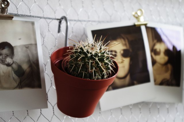 DIY-Mon-pêle-mêle-plantes-et-polaroïds-plante-cactus