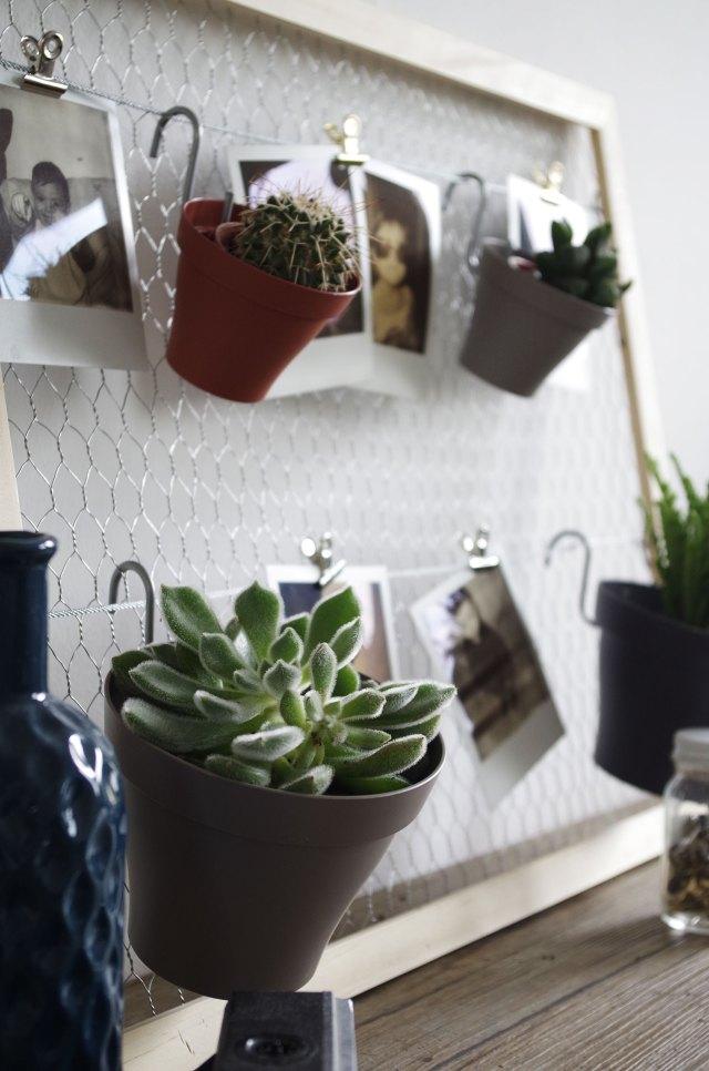 DIY-Mon-pêle-mêle-plantes-et-polaroïds-plante-grasse