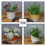 plante-verte-surprise-35-euros