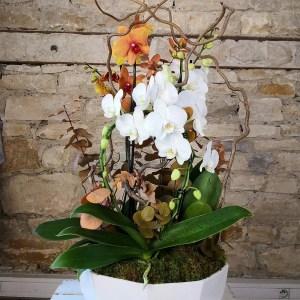 coupes-orchidees-phalénopsis-colorees-atelier-lavarenne-fleuriste-lyon