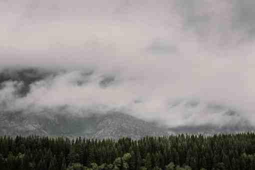 Baumwipfel vor in Wolken verhüllten Bergen
