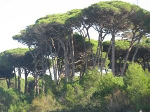 Malreise Provence 8