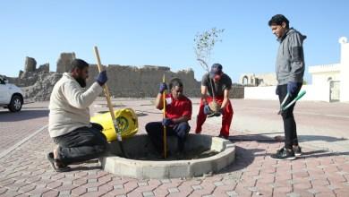 """صورة بالصور: شبابٌ يُشجّرون بلدة اليَمَن بـ """"السِّدر العُمانية"""""""