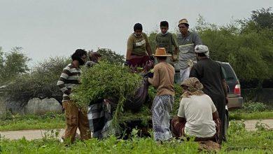 Photo of صحوة مجتمعية بيئية في ظفار وتساؤلات عن دور المؤسسات المختصة