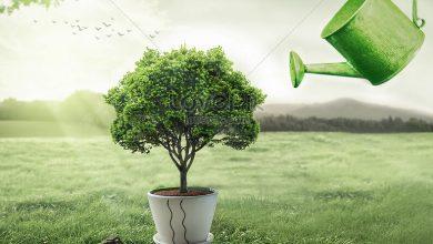صورة ما قصة الاحتفال بيوم الشجرة؟
