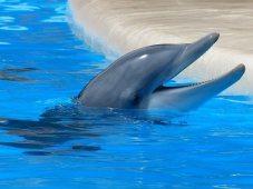 -dolphin-406763_640