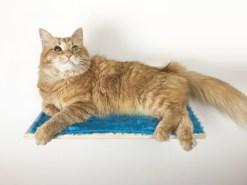 Mensola per gatti in legno