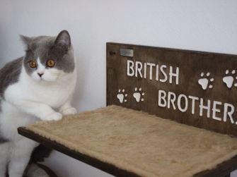 Mensola per gatti in legno con intagli