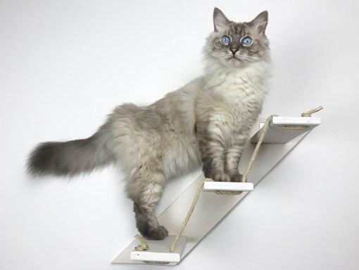 Scaletta per gatti