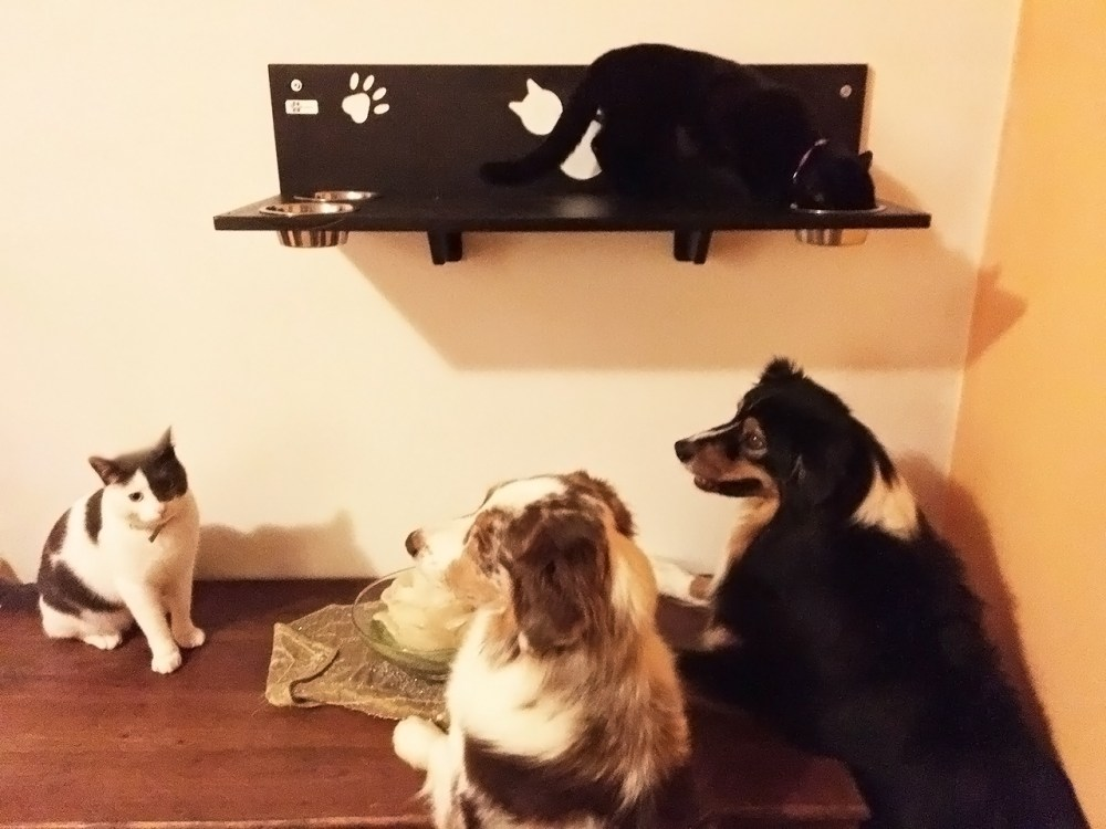 Impedire al cane di mangiare il cibo del gatto