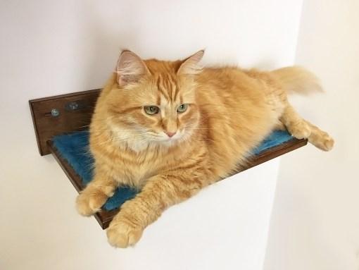Mensole per gatti athleticat