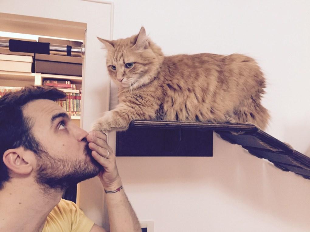 Mobili per gatti
