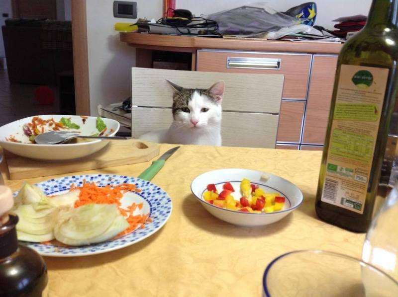 obesità sintomo di stress nel gatto