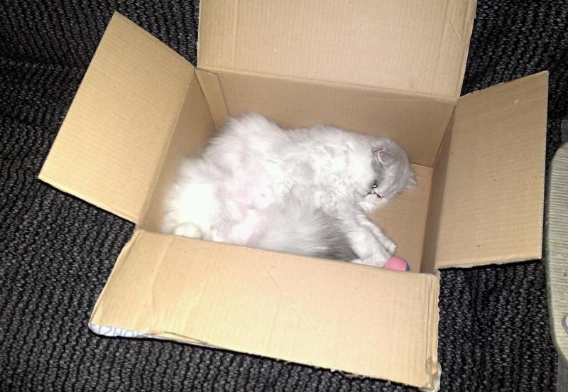 Come fare il trasloco con il gatto